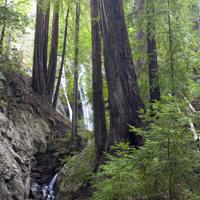 Big Sur Hiking Trails & State Parks