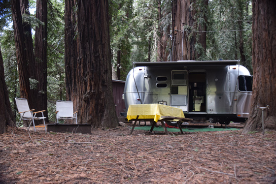 Airstream camping in the redwoods